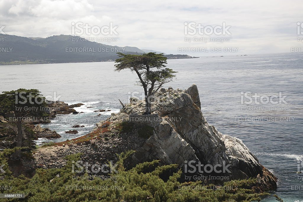 The Lone Cypress at 17 Mile Drive in Big Sur royalty-free stock photo