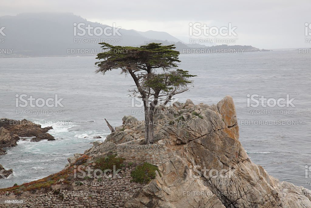 The Lone Cypress at 17 Mile Drive in California stock photo