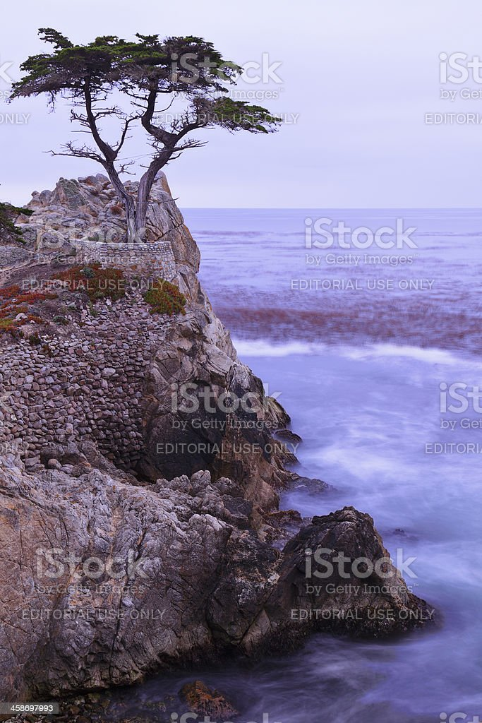 The Lone Cypress royalty-free stock photo