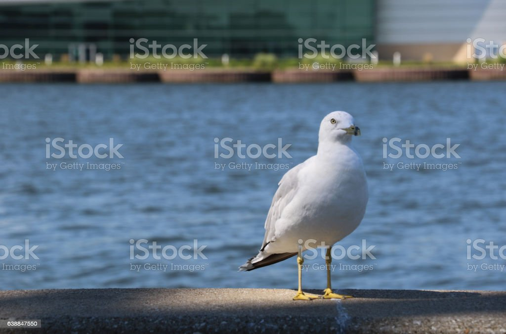 The Lone Seagull stock photo