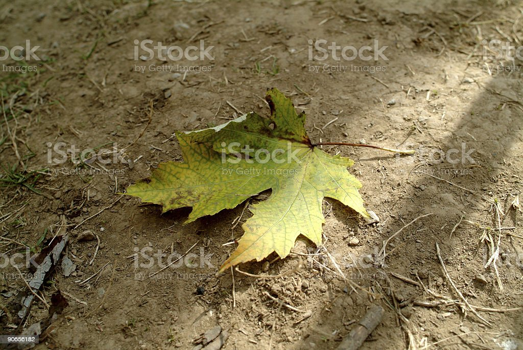 The loneley leaf royalty-free stock photo