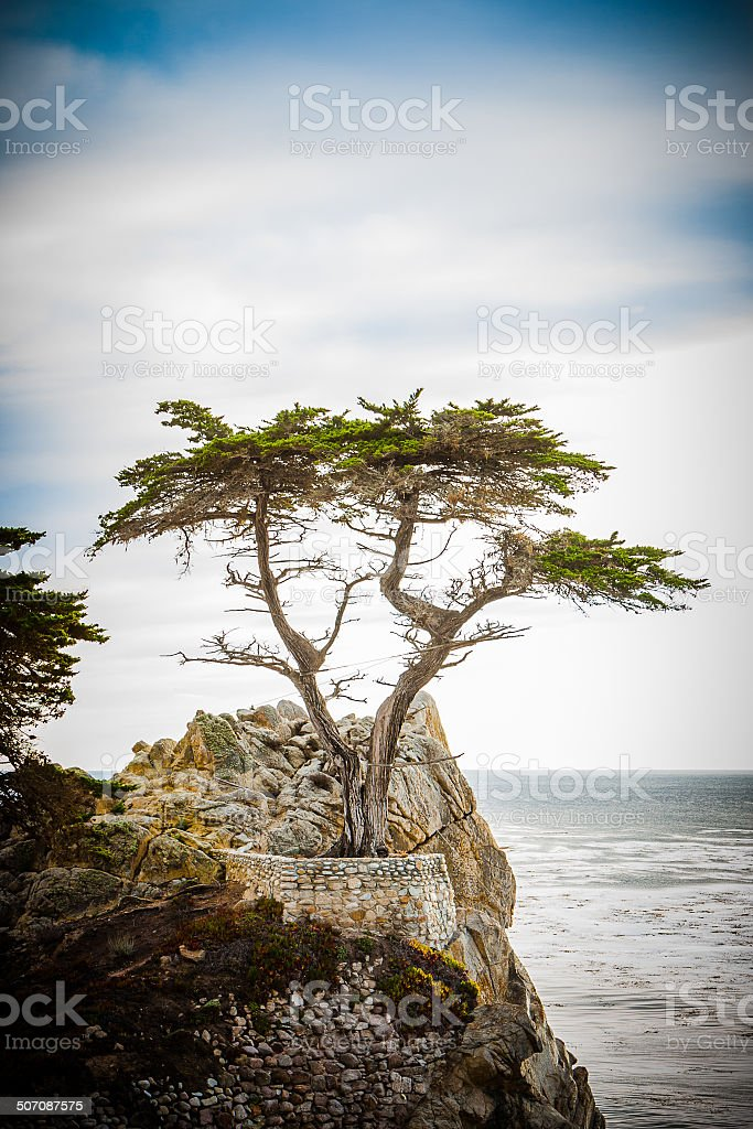 The Lonely Cypress stock photo