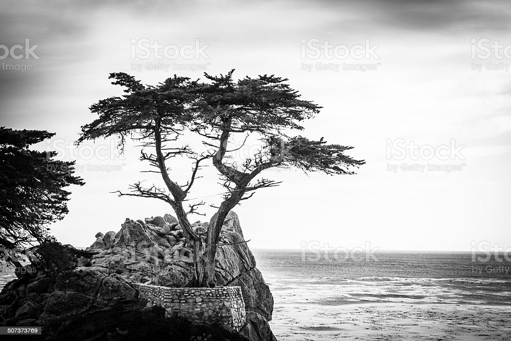 The Lonely Cypress (Black & White) stock photo