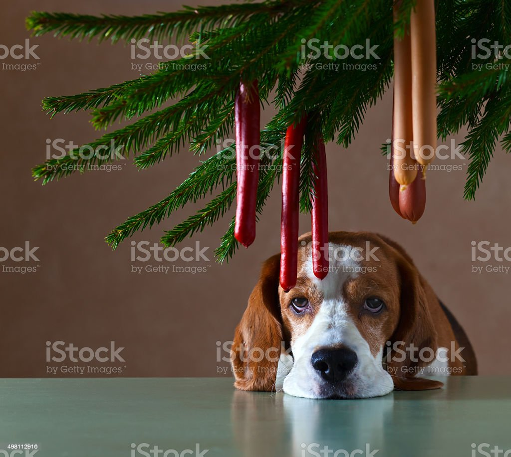 The lonely dog stock photo