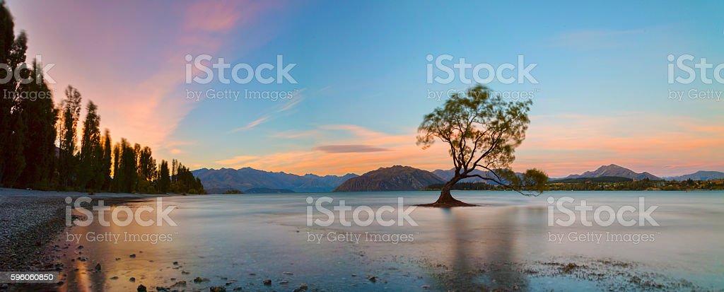 The Lonely Tree at Lake Wanaka, South Island, New Zealand royalty-free stock photo