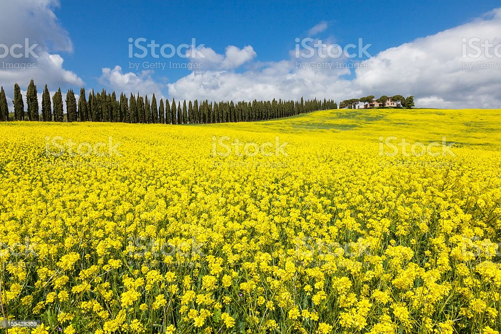 The look of Tuscan spring royalty-free stock photo