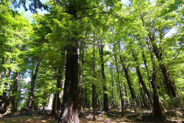 Der Herr der Ringe-Wald in der Nähe von Paradise, Dart River Valley, Glenorchy, Neuseeland – Foto