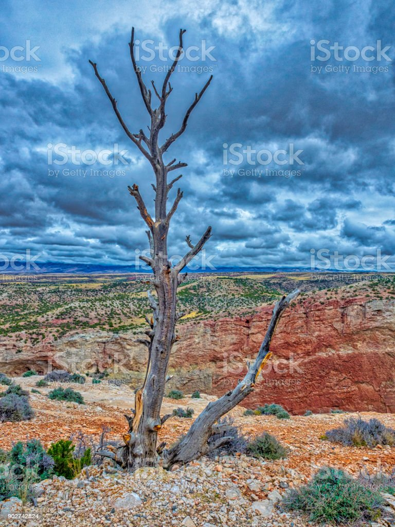 The lost and lonely tree stock photo