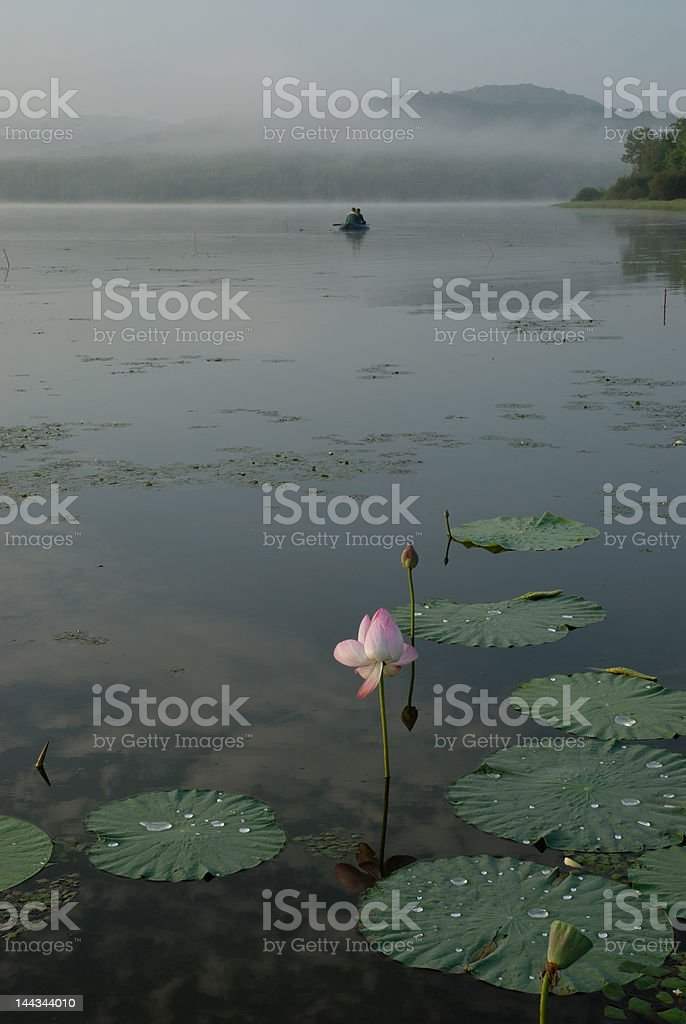 The Lotus flower royalty-free stock photo