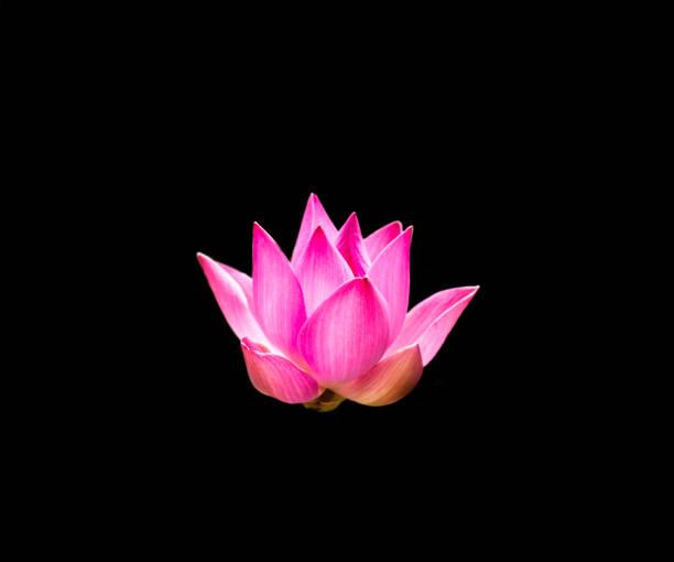 die lotus scheint in der finsternis - lotus symbol stock-fotos und bilder