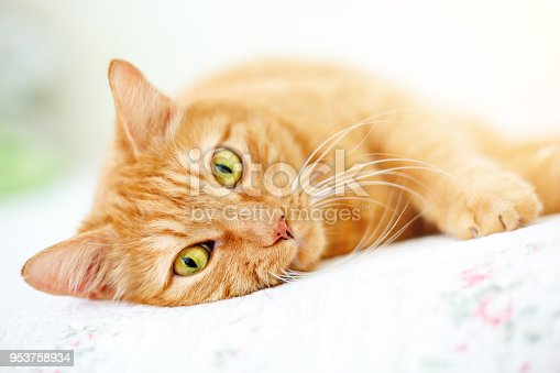The lovely red cat lies on a sofa