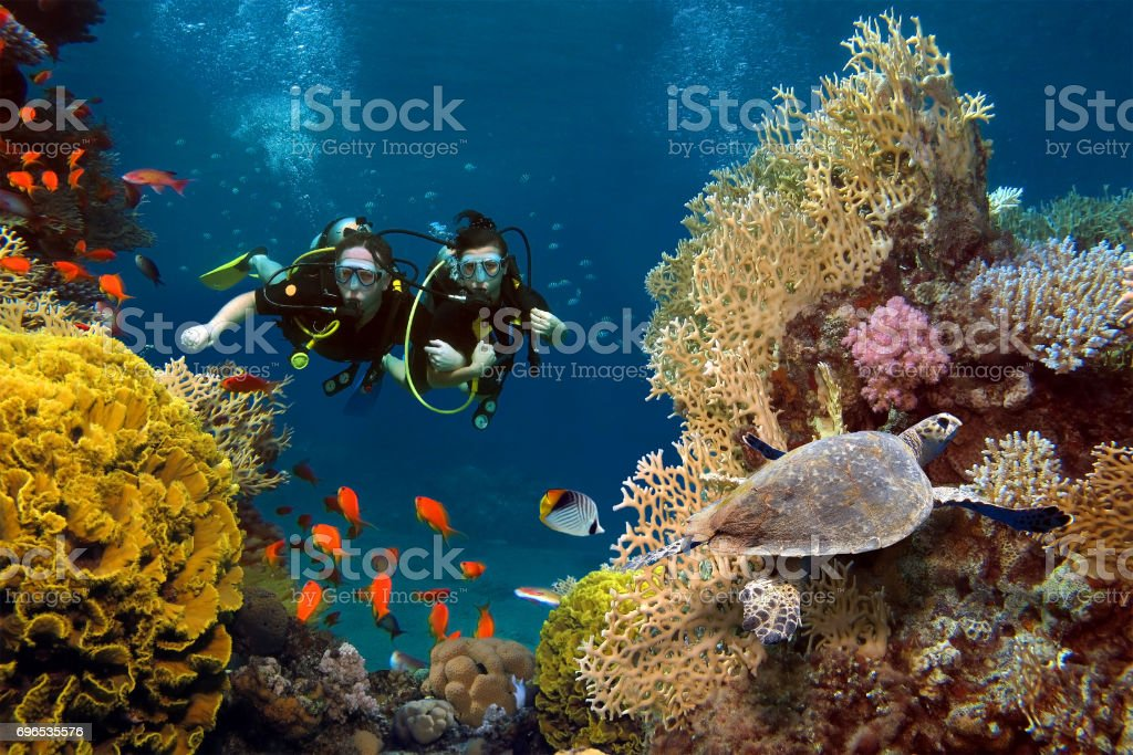 The loving couple dives among corals and fishes in the ocean stock photo