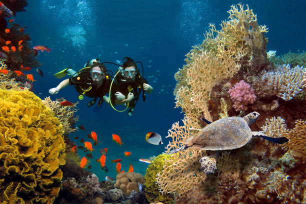 the loving couple dives among corals and fishes in the ocean - underwater diving stock photos and pictures