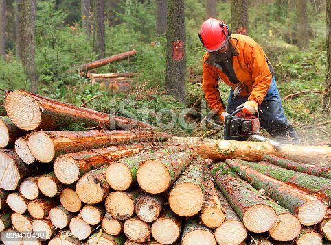 istock The Lumberjack harvesting timber in a forest. 839410430