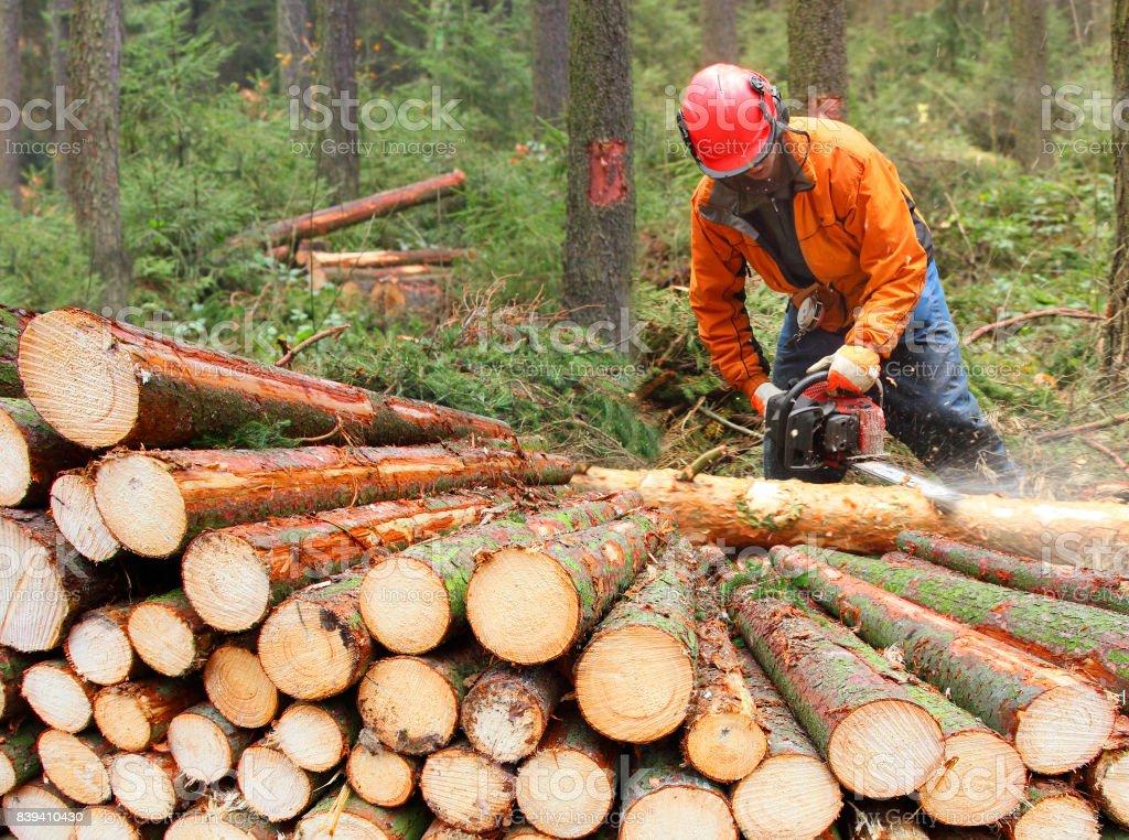 Die Holzfäller, die Ernte von Holz im Wald. – Foto