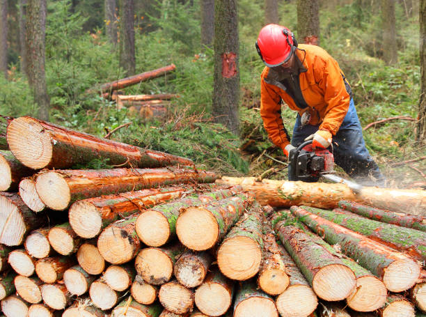 the lumberjack harvesting timber in a forest. - industria forestale foto e immagini stock
