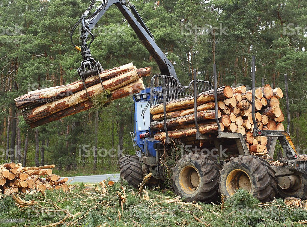 The lumberjack. stock photo