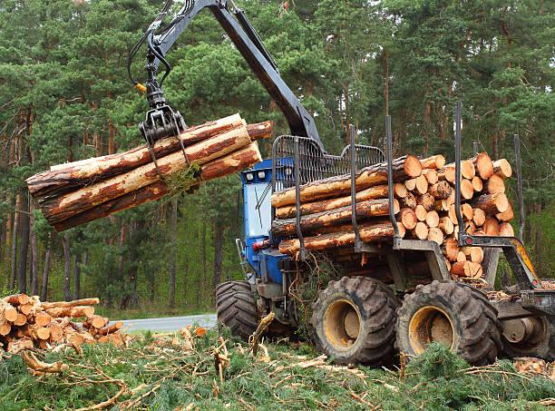 il taglialegna. - industria forestale foto e immagini stock