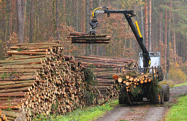 The lumberjack. The harvester working in a forest. forester stock pictures, royalty-free photos & images
