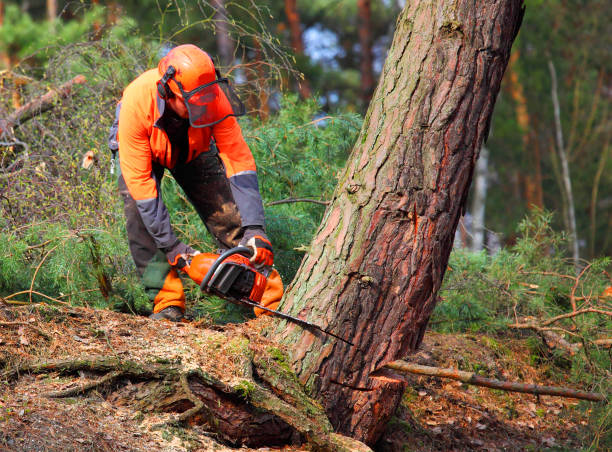 The Lumberjack working in a forest. stock photo
