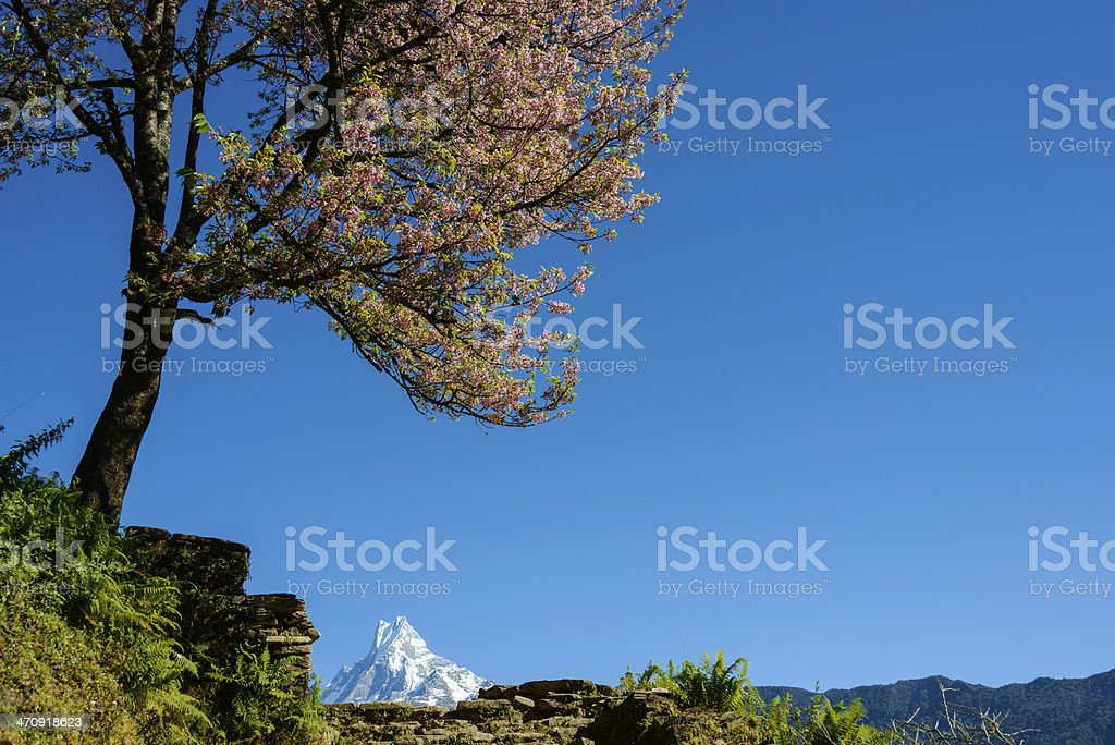 The Machapuchre in Nepal royalty-free stock photo