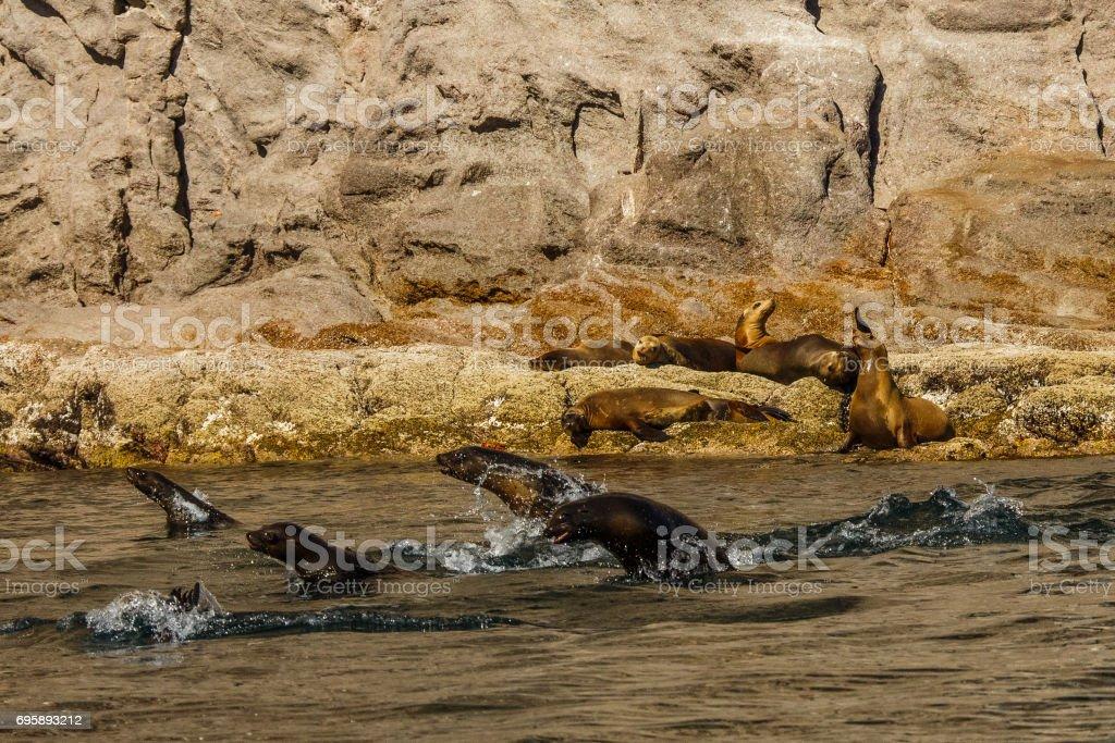 La magia de Baja California - foto de stock