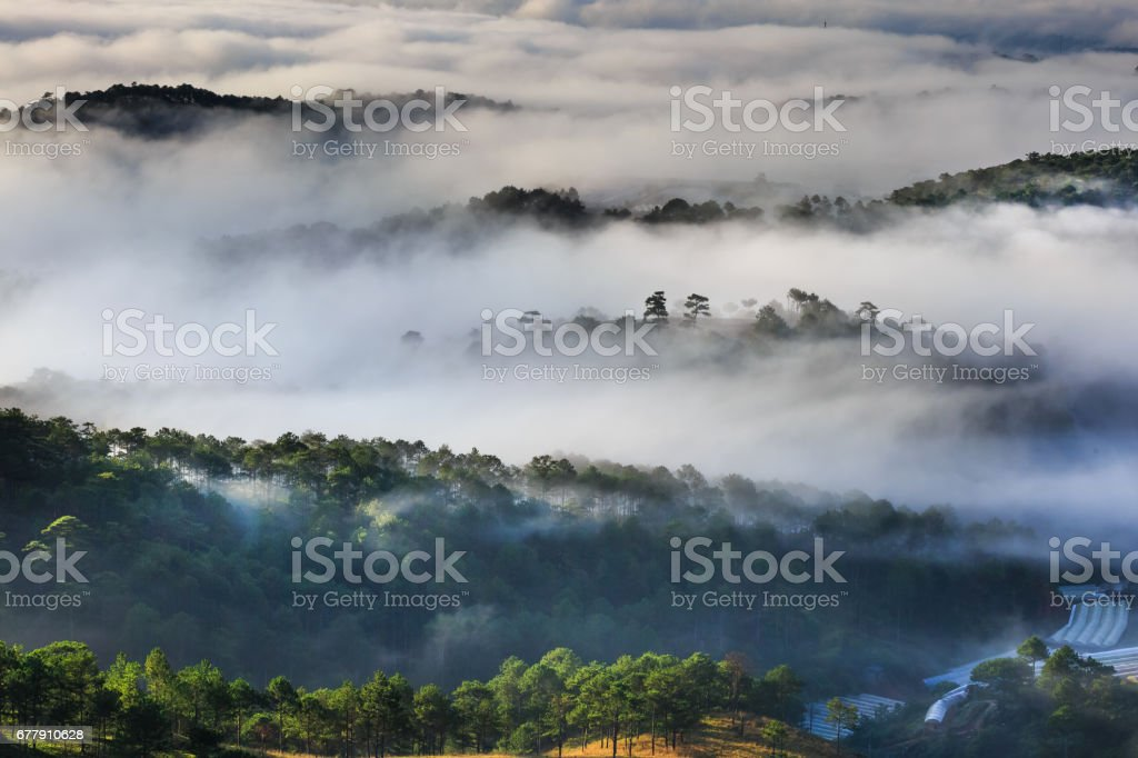 The magical beauty of the pine forests on the hill hidden in fog and cloud in the early morning at Da Lat town. Vietnam royalty-free stock photo