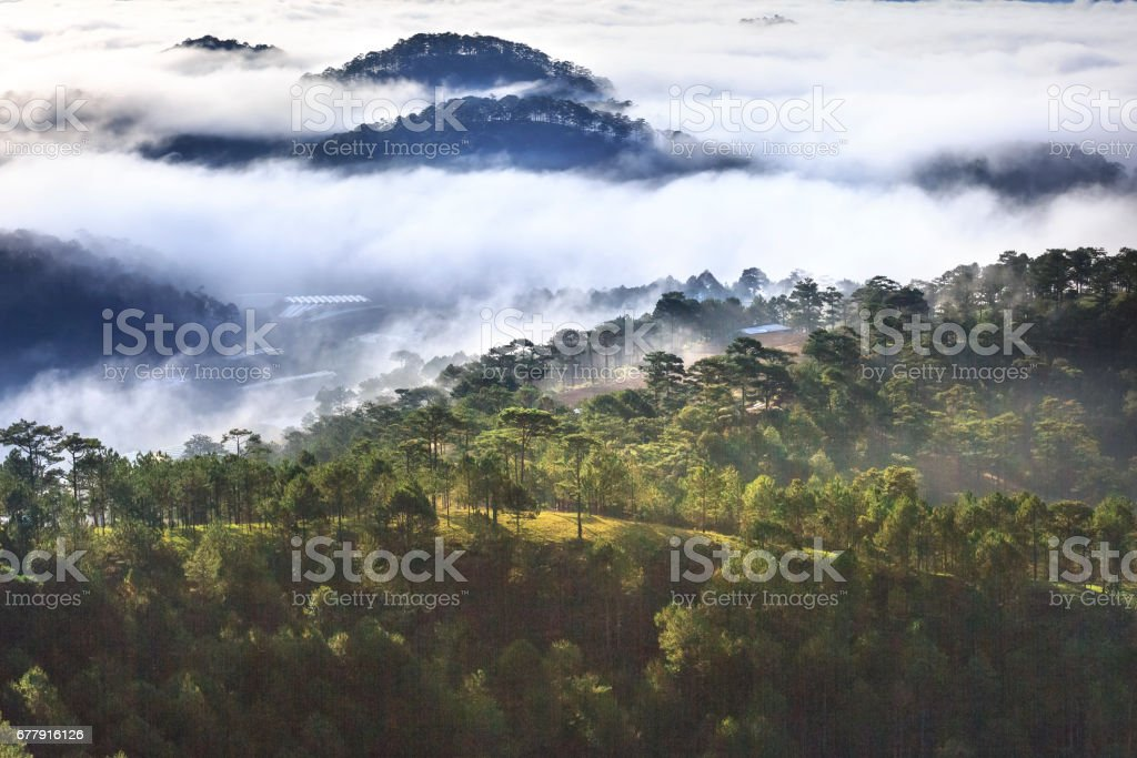 The magical beauty of the pine forests on the hill hidden in fog and cloud in the early morning at Da Lat town. Vietnam stock photo
