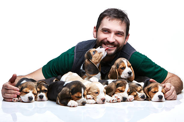 The man and big group of a beagle puppies picture id474088584?b=1&k=6&m=474088584&s=612x612&w=0&h=zn cvlzzoi7meaw n yn88lzbpq53m6mxxd3eafkgtc=