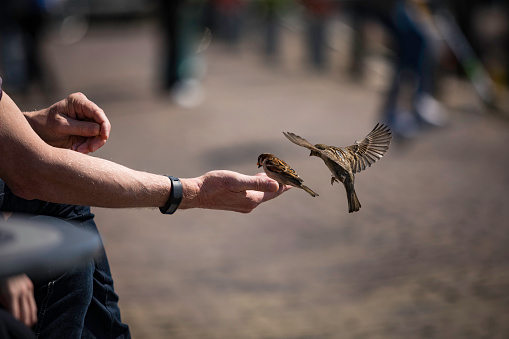 istock the man feeding birds 904390346