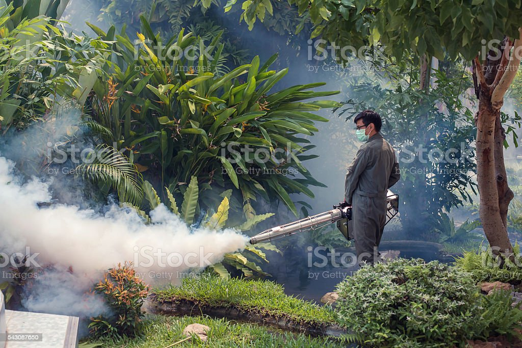 The man fogging to eliminate mosquito stock photo