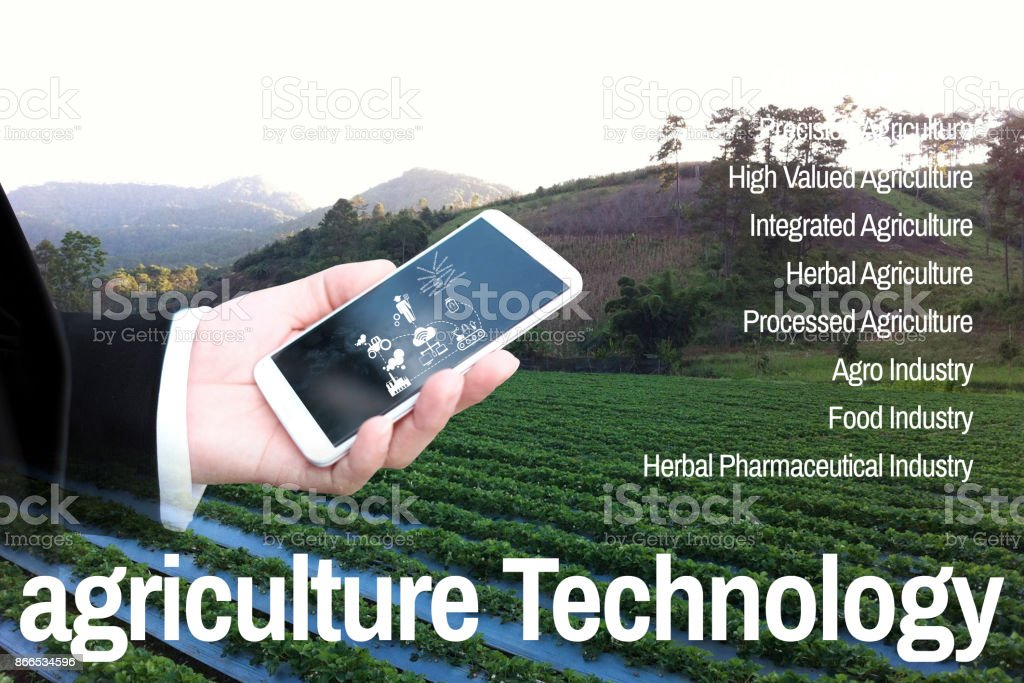 The man in work clothes look at mobile on agricultural technology background farm strawberries stock photo