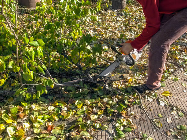 The man leaned over and sawed into pieces a branch with green-yellow leaves that lay on the ground stock photo