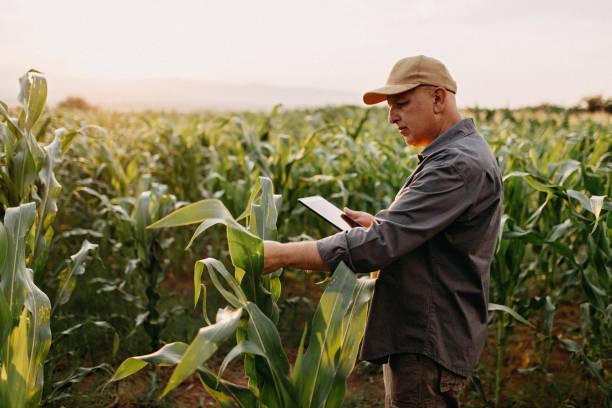 남자는 바퀴벌레를 감독 - 농업 뉴스 사진 이미지