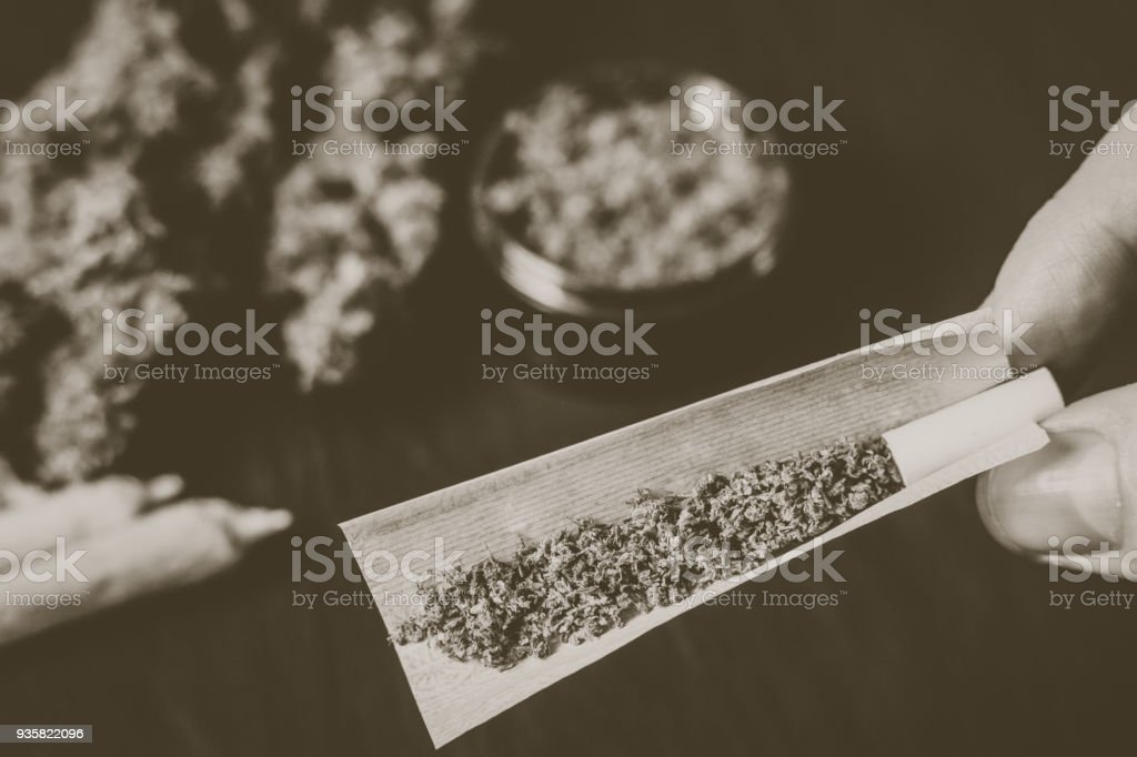 The man rolled the jamb with marijuana on the background of bud Vintage color stock photo