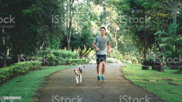 The man running with his puppy beagle dog at the garden picture id1034306340?b=1&k=6&m=1034306340&s=612x612&h=l5hwjaovdevfnwdqiitrw4zl7xwvkiqa368ewi8no8u=