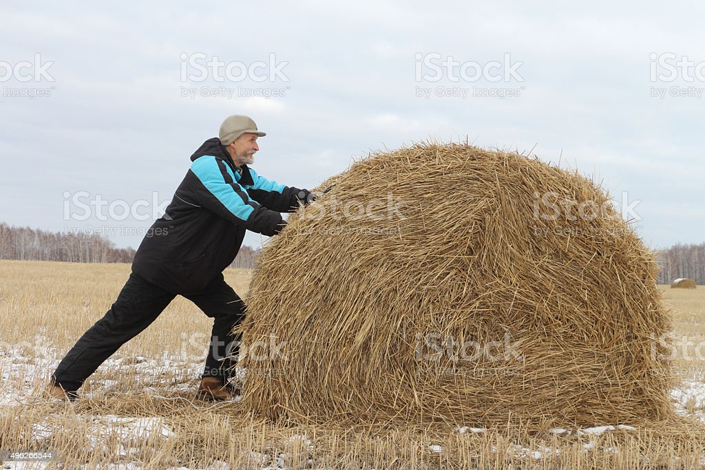 The man the pushing hay sheaf in the field in the fall
