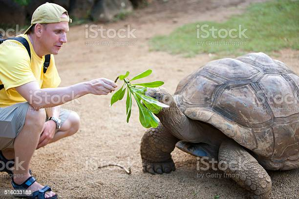 The man tourist feeds a turtle picture id516033188?b=1&k=6&m=516033188&s=612x612&h=mumnjyexmabnuaghbssgag inx5li3or7ng1 ogbada=