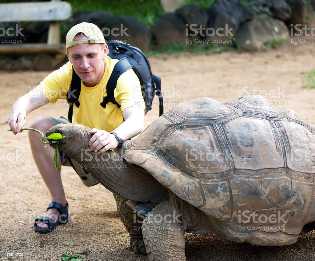 The man  tourist feeds  turtle stock photo