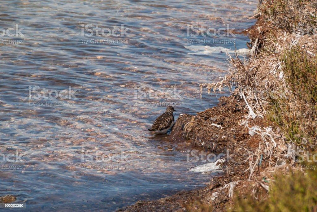 The Mar Menor of Murcia zbiór zdjęć royalty-free