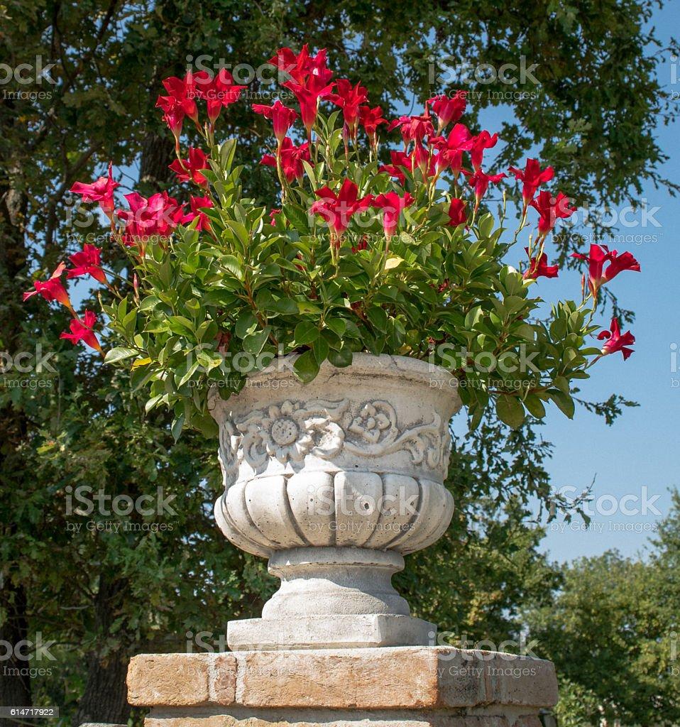 The marble vase. stock photo