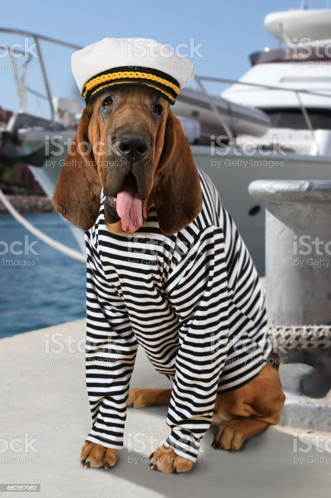 The mariner Bloodhound dog photo libre de droits