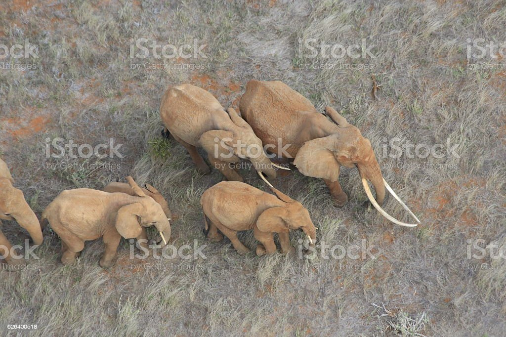 The Matriarch Elephant stock photo