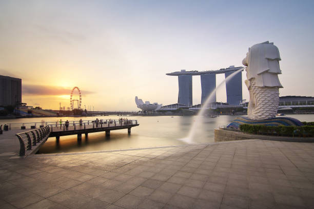 Singapore - July 30, 2017: The Mer lion fountain and marina bay sands during sunrise is famous landmark and very popular for photographers and tourists of Singapore city Singapore - July 30, 2017: The Mer lion fountain and marina bay sands during sunrise is famous landmark and very popular for photographers and tourists of Singapore city merlion statue stock pictures, royalty-free photos & images