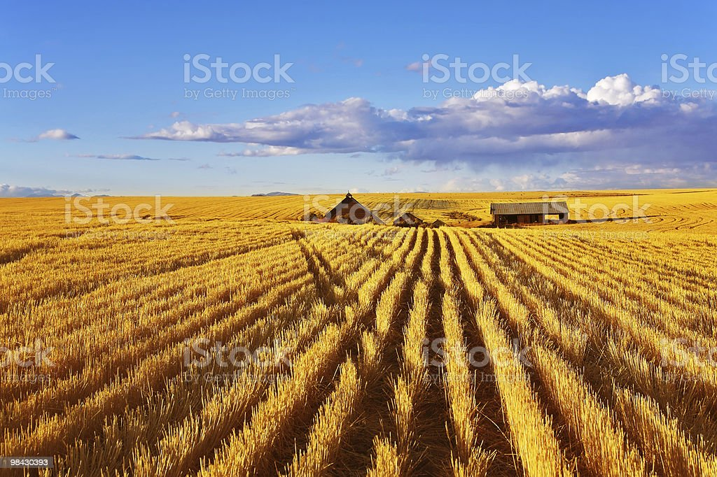 The midday on fields of Montana royalty-free stock photo