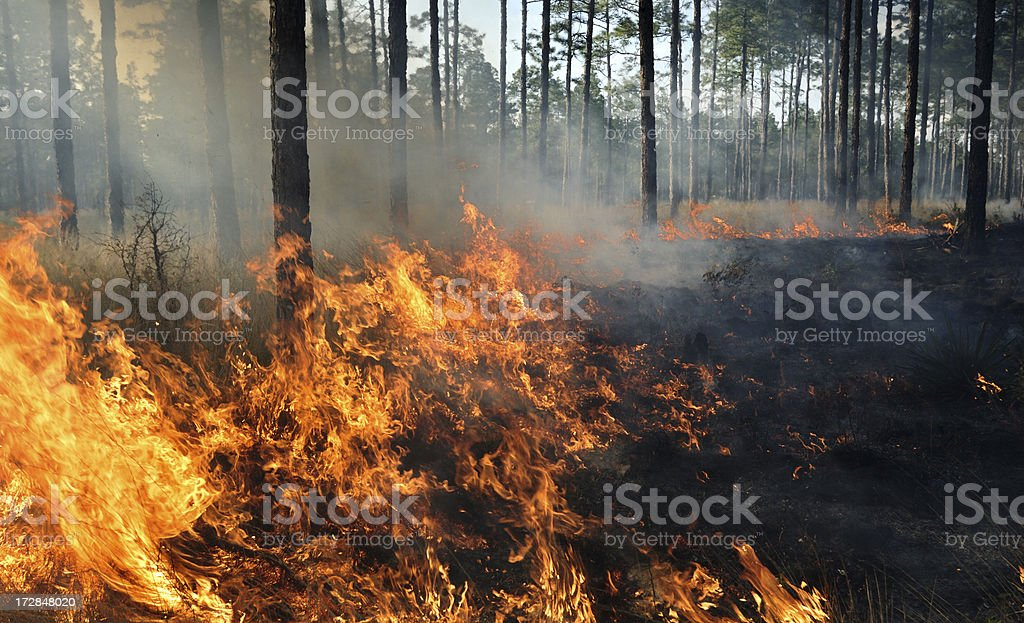 The middle of a forest fire stock photo