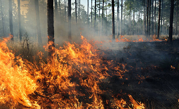 the middle of a forest fire - bosbrand stockfoto's en -beelden