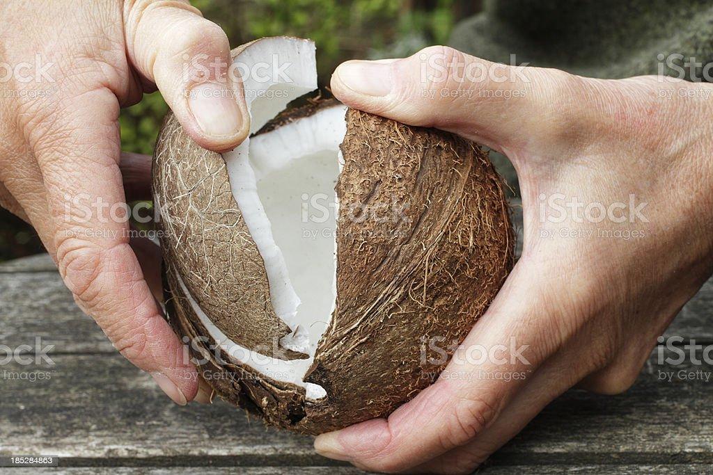 Coconut splitting open held in two hands stock photo