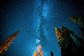 Looking up to the Sequoia Night Sky