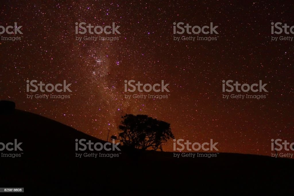 The Milky Way Over New Zealand with a Tree Silhouette stock photo